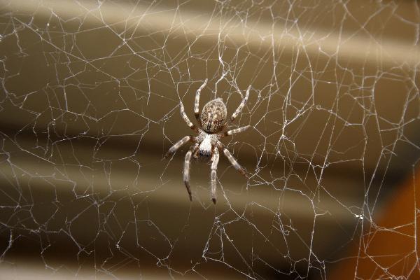Spiders Treatment Ipswich